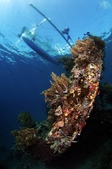20180405_Amed_Bali 巴里島Amed潛水 Part 4:小而美的沉船,水深十米內,平易近人 (真羨慕這樣的潛水環境)
