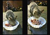 20170506-0507_東北角 Northeast Coast,Taiwan:我們自己都還沒吃晚餐,就忙著買罐罐給小咪吃,現實的小咪,肚子餓像狗一樣乖,吃飽就不理人啦XD