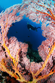 20180404_Amed_Bali 巴里島Amed潛水 Part 3:海扇相框   (剛好是非洲大陸的造型,真奇妙:)