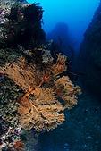 20090625國境之南最終回:很多獨立大礁石,上頭都有大海扇