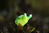 20210404-0406_墾丁 Kenting,Taiwan:20210404 2nd赤筆仔礁-淺礁的可愛朋友