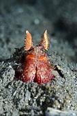 20190831-0901_東北角(上) Northeast Coast,Taiwan:顏色很亮麗的螳螂蝦