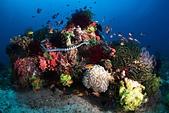 20191008_Panglao,Bohol Part 2:五彩繽紛的礁石,只是這裏的其中一顆而已