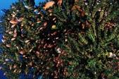 20171004-1011_Anilao Part III:好擁擠的綠珊瑚公寓啊~~