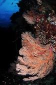 20170405 Ambon Diving 安汶潛水趣:意境
