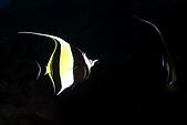 20181229-1230 小琉球(上)  Siaoliouciou,Taiwan:海底總動員的奇哥