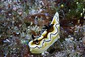 20080406-08小琉球:背上沒洗乾淨海蛞蝓