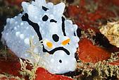 20090830東北角:永遠的不開心海蛞蝓