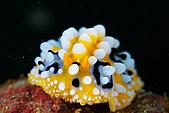 9607-東北角:海蛞蝓
