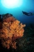 20180404_Amed_Bali 巴里島Amed潛水 Part 3:sea fans & diver