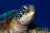 20200228-0303_Green island,Taiwan 228綠島 (上):百微遇到海龜的極限