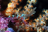 20210404-0406_墾丁 Kenting,Taiwan:20210404 3rd赤筆仔礁-普Nu但有美美的背景,還是可以拍的