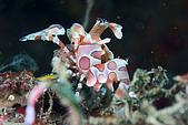 20090726東北角:阿星說臘膜蝦都喜歡正面對相機,所以這角度反而少見