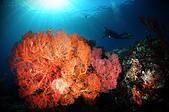 20180404_Amed_Bali 巴里島Amed潛水 Part 3:當天的光線很加分~