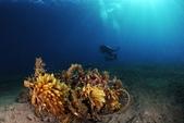 20180404_Amed_Bali 巴里島Amed潛水 Part 3:20180404 1st Bunutan reef - 沒想到這坨廢棄魚網拍起來別有一番美感~