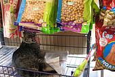 960922-960925 Sabah:超市的小貓