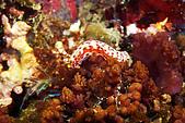 20080629東北角:海蛞蝓