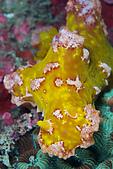 20090817東北角North-East Taiwan:非常罕見的神奇海蛞蝓,質感就是海綿