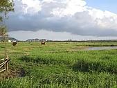 20091018再訪墾丁第二彈 Kenting:賴到下午4點才出門,隨便轉個彎,就騎進一望無際的大草原,草原上還有牛在吃草