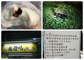 20191208-09_小琉球 Siaoliouciou,Taiwan:阿星:''老闆我要一杯超難喝紅茶'',被招牌騙到,哈哈~小黑刁著一條疑似魚乾的東西到草叢偷吃,現行犯