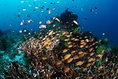 20191008_Panglao,Bohol Part 2:20191008 2nd Pamilacan island- 魚魚魚
