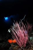 20170405 Ambon Diving 安汶潛水趣:天窗