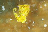 20080425Moalboal - 20080502:黃金小花枝