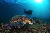 20210101-0103_小琉球 Siaoliouciou,Taiwan:20210103 1st- 來小琉球怎麼可能少了海龜呢~