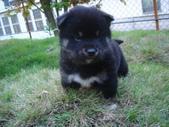 小狗:1317468549.jpg