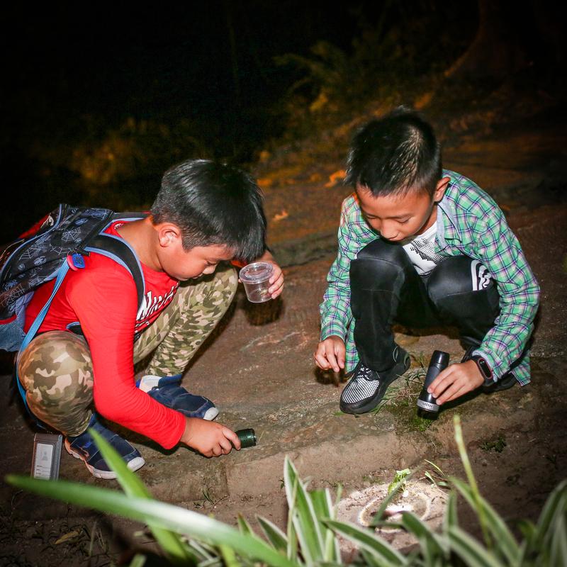《甲蟲日記簿》夜間觀察活動:998A1363.jpg