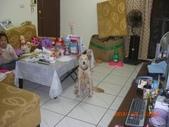第一名犬--邊境牧羊犬:2013年01月29日CIMG0001.JPG