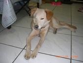 第一名犬--邊境牧羊犬:2013年01月29日CIMG0004.JPG