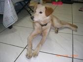 第一名犬--邊境牧羊犬:2013年01月29日CIMG0005.JPG