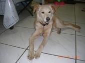 第一名犬--邊境牧羊犬:2013年01月29日CIMG0006.JPG