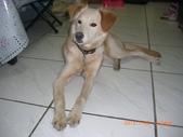 第一名犬--邊境牧羊犬:2013年01月29日CIMG0007.JPG