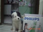 第一名犬--邊境牧羊犬:2013年2月10日CIMG0032.JPG