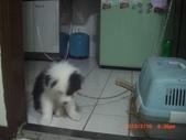 第一名犬--邊境牧羊犬:2013年2月10日CIMG0041.JPG