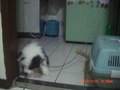 第一名犬--邊境牧羊犬:2013年2月10日CIMG0042.JPG