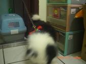 第一名犬--邊境牧羊犬:2013年2月10日CIMG0046.JPG