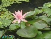 荷花蓮花:IMG_6302.JPG