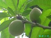 花草樹木2:IMG_5032.JPG