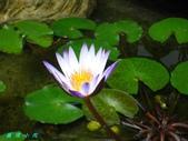 荷花蓮花:IMG_0734.JPG