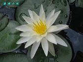 荷花蓮花:IMG_3655