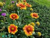 菊花:20200809_171038.jpg