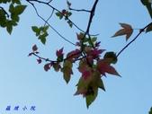 花草樹木2:20151201_153509.jpg