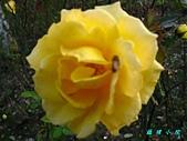 玫瑰薔薇:IMG_6703.jpg