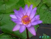 荷花蓮花:IMG_7711.jpg