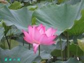 荷花蓮花:IMG_7872.jpg