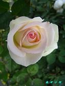 玫瑰薔薇:IMG_0436