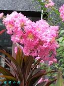 花草樹木2:20000102_023122.jpg